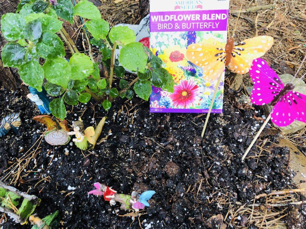 Fairy Garden Wild Flowers