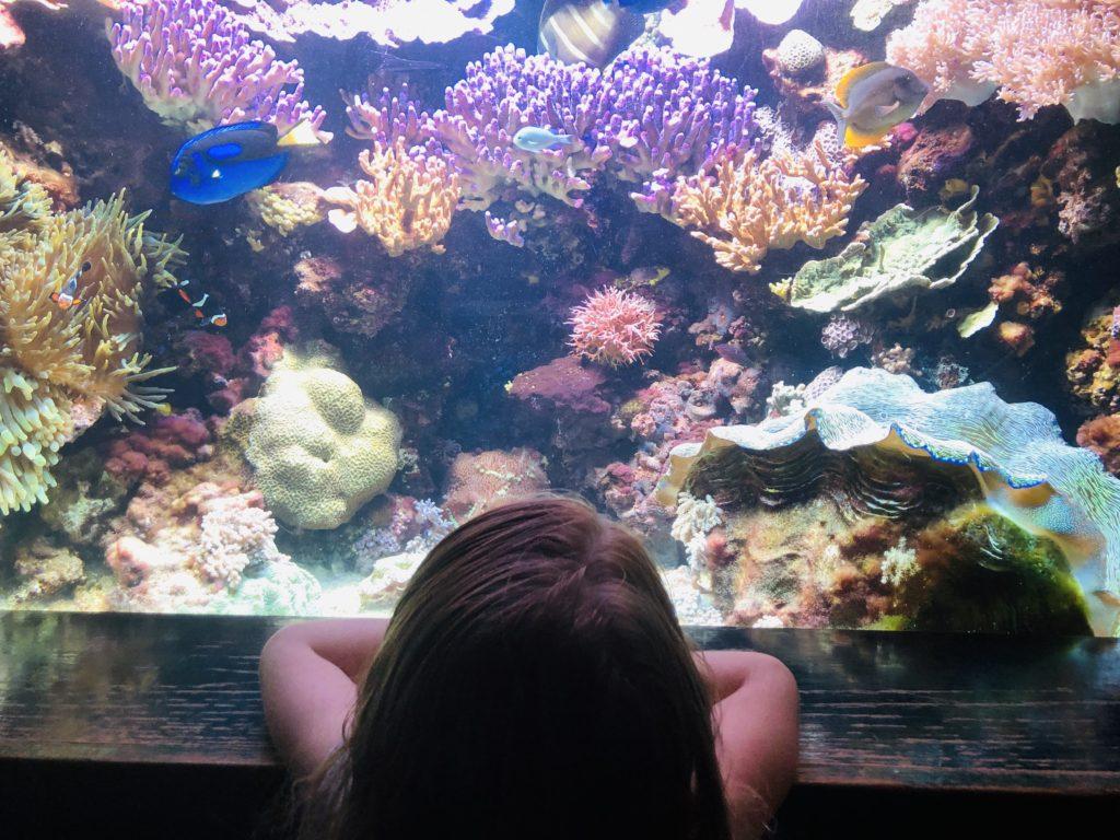 Take the kids to the aquarium